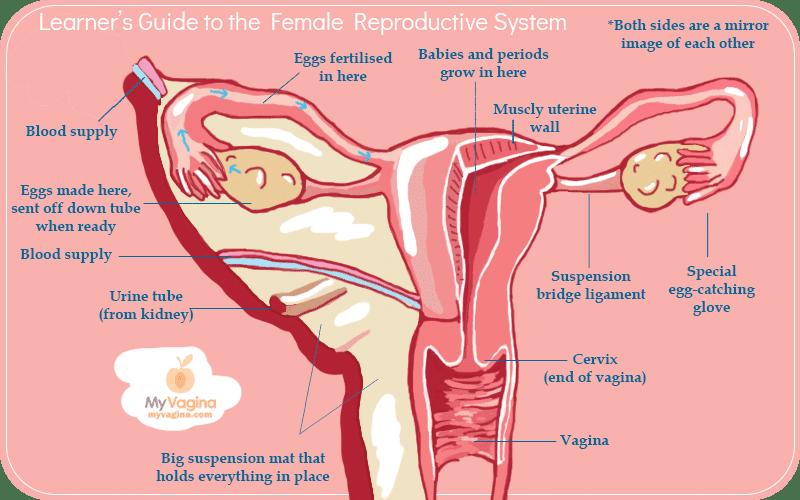 Vag basics — My Vagina