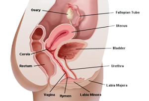 Septate Hymen Sex 43