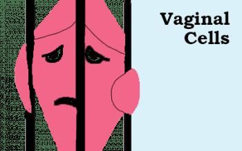 Vaginal Cells