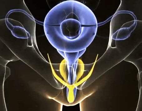 The MRI of the Clitoris