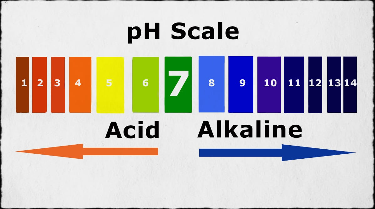 ph Scale for vaginas